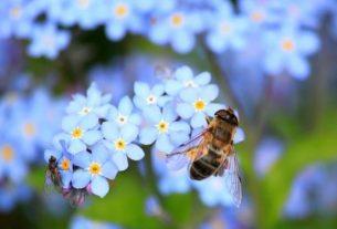 Jak bezpiecznie stosować środki ochrony roślin?